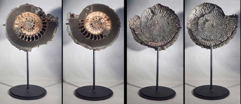 Large Ammonite Fossil Split Pair Custom Display Stands.