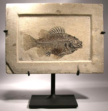 Fossil Fish Display