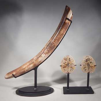 Small Mammoth Tusk and a Petrified (fossilized) Pine Cone Split Pair Custom Display Stands (front).