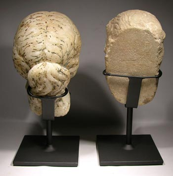 Roman Marble Bust Displays