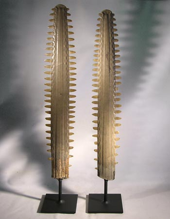 Sawfish Ray Blade Custom Display Stands